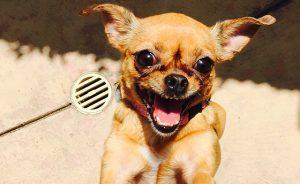 4_Feature_Kosher_Dog_0917